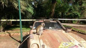 Mad Max Monkey