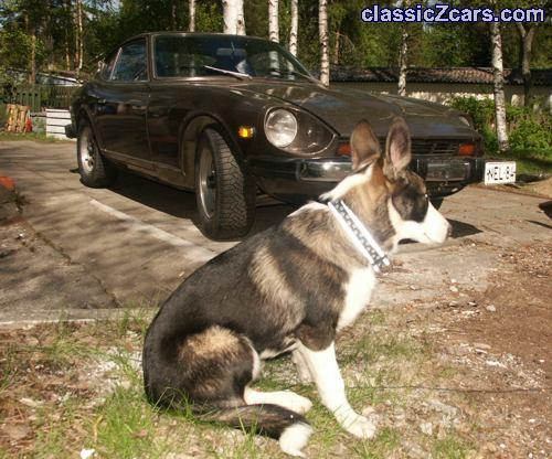 Niilo the Dog ready for a ride